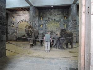 Le salut des éléphants !